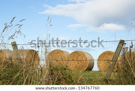 Round bales of hay, newly harvested, behind a barbed wire fence