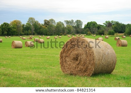 round bales of straw in the meadow, Oxford, UK