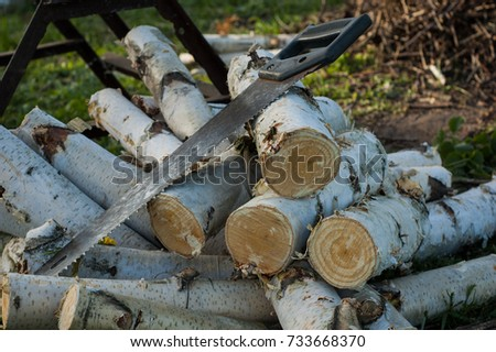 Round Birch Logs Lie Near The Saw And The Place Where They Were Cut. #