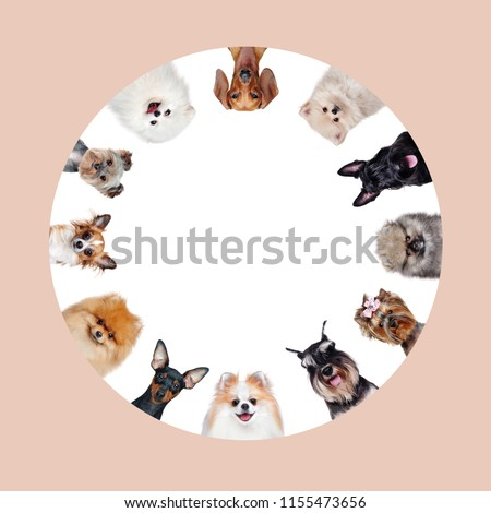 Round collage of different breed dogs