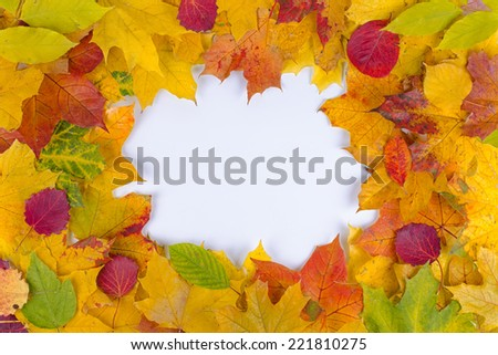 round frame of fallen autumn leaves of different color