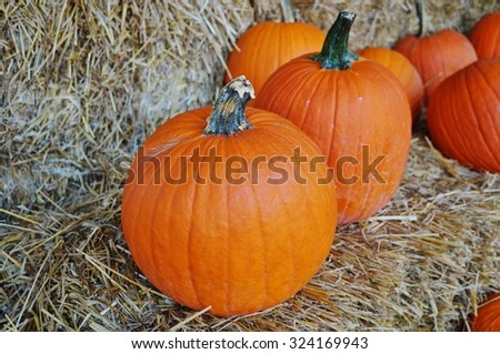 Round pumpkins in bulk at the farmers market in the fall #324169943