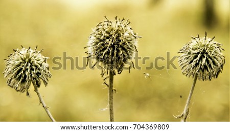 round spine autumn nature - Shutterstock ID 704369809