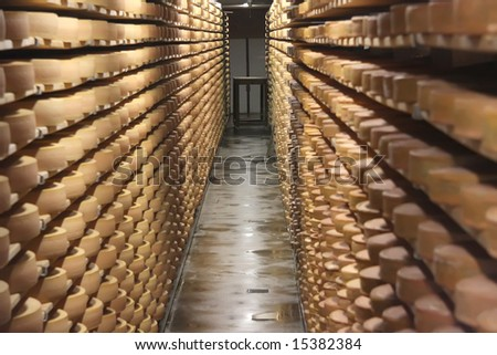 Round stacks of cheese stored on shelves in factory warehouse
