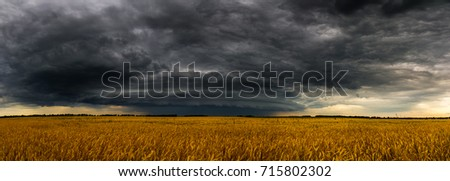 Round storm cloud over a wheat fieldin Russia. Panorama