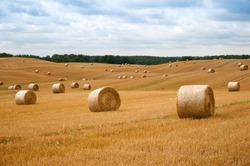 Round straw bales in harvested fields and blue sky with clouds.