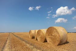 round straw bales lie on the field after the grain harvest