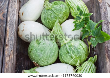 Round striped zucchinies and white eggplants. Homegrown harvest in an old vintage box #1173790030