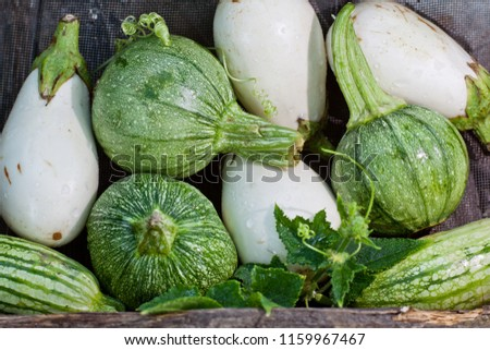 Round striped zucchinies with white eggplants. Homegrown harvest. #1159967467