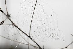 round web on field plants illuminated in foggy morning sun. Selective focus