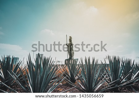 Roundabout of minerva goddess of wisdom, arts and military strategy in addition to the protector of Rome, in this case of Guadalajara, surrounded by agave plants from which tequila is obtained