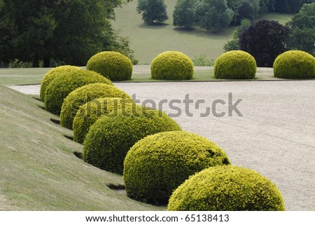 Rounded topiary evergreen Yew bushes in an English country garden. Surrey. England