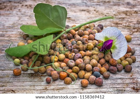 Roveja beans (Pisum sativum var. arvense), also known as robiglio or austrian winter pea, is a Mediterranean pea dried grown in Italy and the Netherlands. Photo stock ©