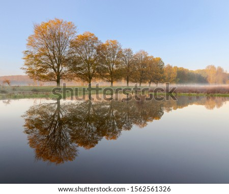 row of autumn trees reflecting in a lake, tranquil autumn image, blue and orange, reflection, mist #1562561326