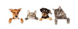 Row of cats and dogs hanging their paws over a white banner. Image sized to fit a popular social media timeline photo placeholder
