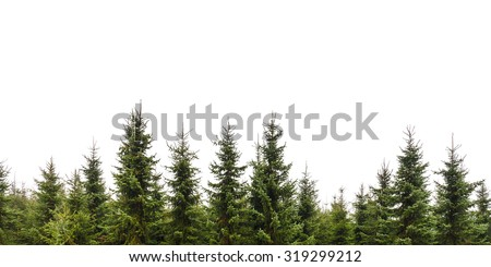 Row of Christmas pine trees isolated on a white background #319299212