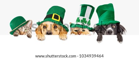 Row of cute dogs and cats wearing green St Patrick's Day hats while peeking over a blank white web banner or social media cover #1034939464