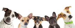 Row of different size and breed dogs over white horizontal social media or web abnner with room for text