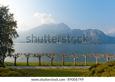 Row of plane trees at Villa Melzi on Lake Como