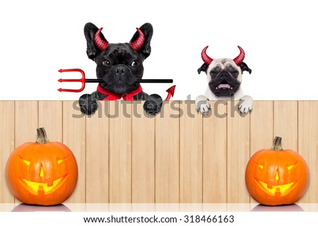 row of pumpkin dogs in a row behind a wall of wood dressed as devil demons, isolated on white background