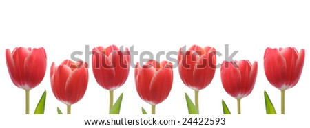 Row of red tulips for border or frame - stock photo