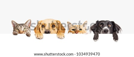 Row of the tops of heads of cats and dogs with paws up, peeking over a blank white sign. Sized for web banner or social media cover #1034939470