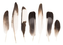 Row of the various feathers isolated