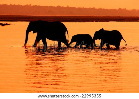 Row of three elephants in the lake, Africa