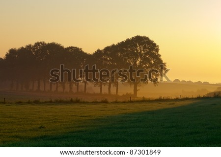 Row of trees during misty sunrise in agricultural landscape