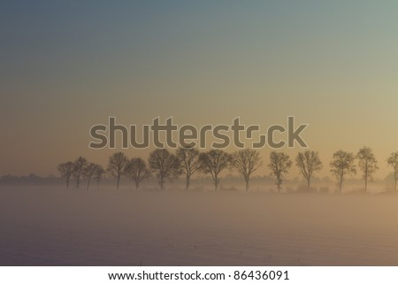 Row of trees in in fog during winter and a sunset which gives it the colors of the rainbow.