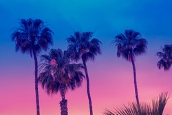Row of tropic palm trees against sunset sky. Gradient color. Silhouette of deep palm trees. Tropic evening landscape. Diagonal purple pink gradient color. Beautiful tropic nature.