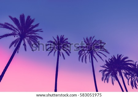 row of tropic palm trees...