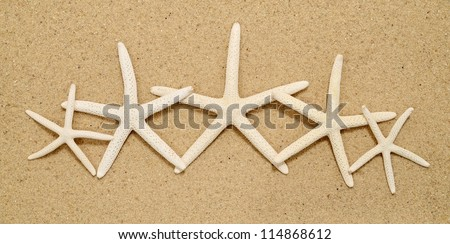 Row of white pencil starfish on a sandy beach