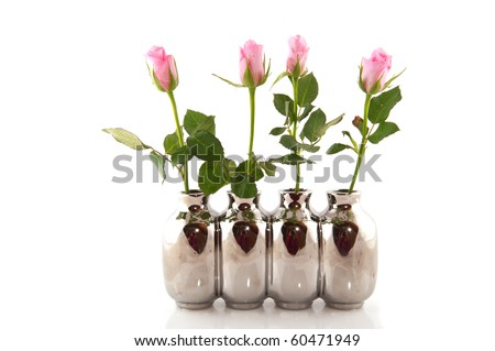 row pink roses in silver vases isolated over white