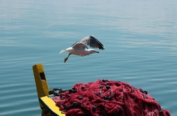 Rowboat anchored and seagull fly over the boat.