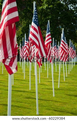 Rows of American flags at the park on Memorial Day