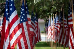 Rows of American flags in outdoor setting.