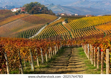 Rows of colorful autumnal vineyards on the gills of Langhe in Piedmont, Northern Italy. Foto stock ©