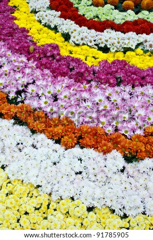 Rows of colorful flowers