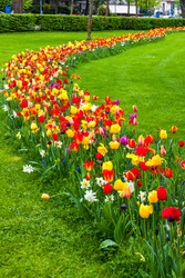 Rows of colourful blooming tulips in the Champ de Mars (Field of Mars), public park in Colmar city, Alsace region, France. Springtime