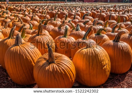 Rows of different variety and sizes of pumpkins grouped together at a farm for sale on a bright sunny day in early autumn