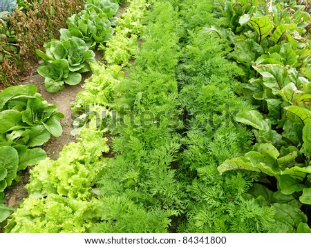 Rows of different vegetables growing in a garden