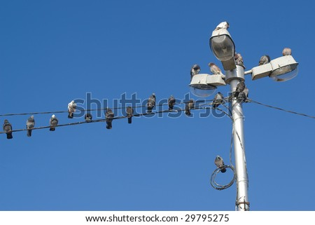 Rows of doves on a wires and lamps