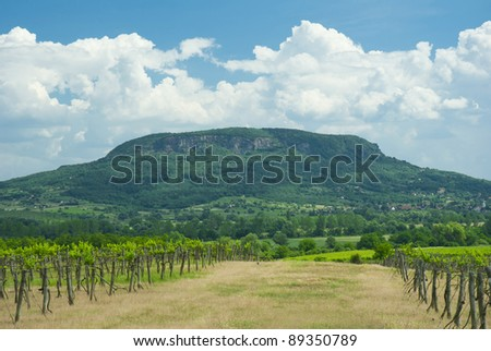 rows of grapes with hill