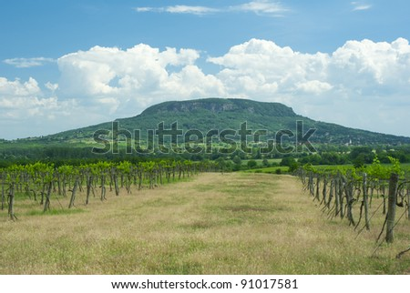rows of grapes with hill - stock photo