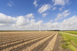 Rows of harvested onions in a flat Dutch landscape.