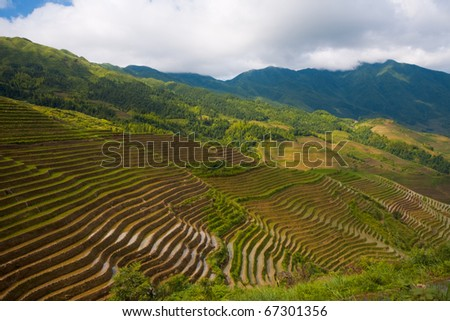 Rows of meticulously cultivated rice terraces form steps on the side of a mountain in Titian Longji, the Dragon's Backbone in Guanxi, China