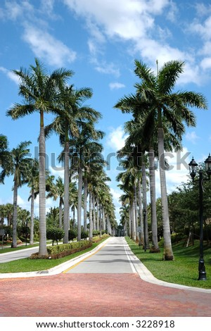 Rows of palm trees along a road