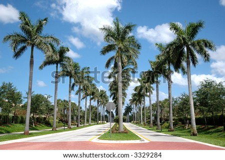 Rows of palm trees along roads