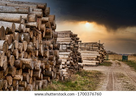 Photo of  Rows of piled of logs , waiting to be processed, at a local rural lumber mill, made into lumber for construction.